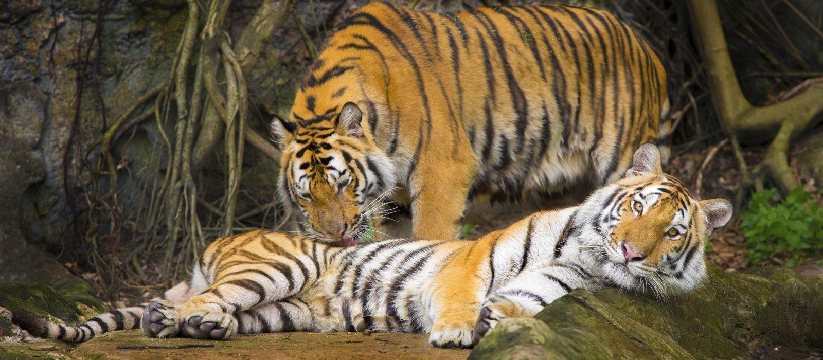 Südindien: Gewürzduft und Artenvielfalt Urlaub 1