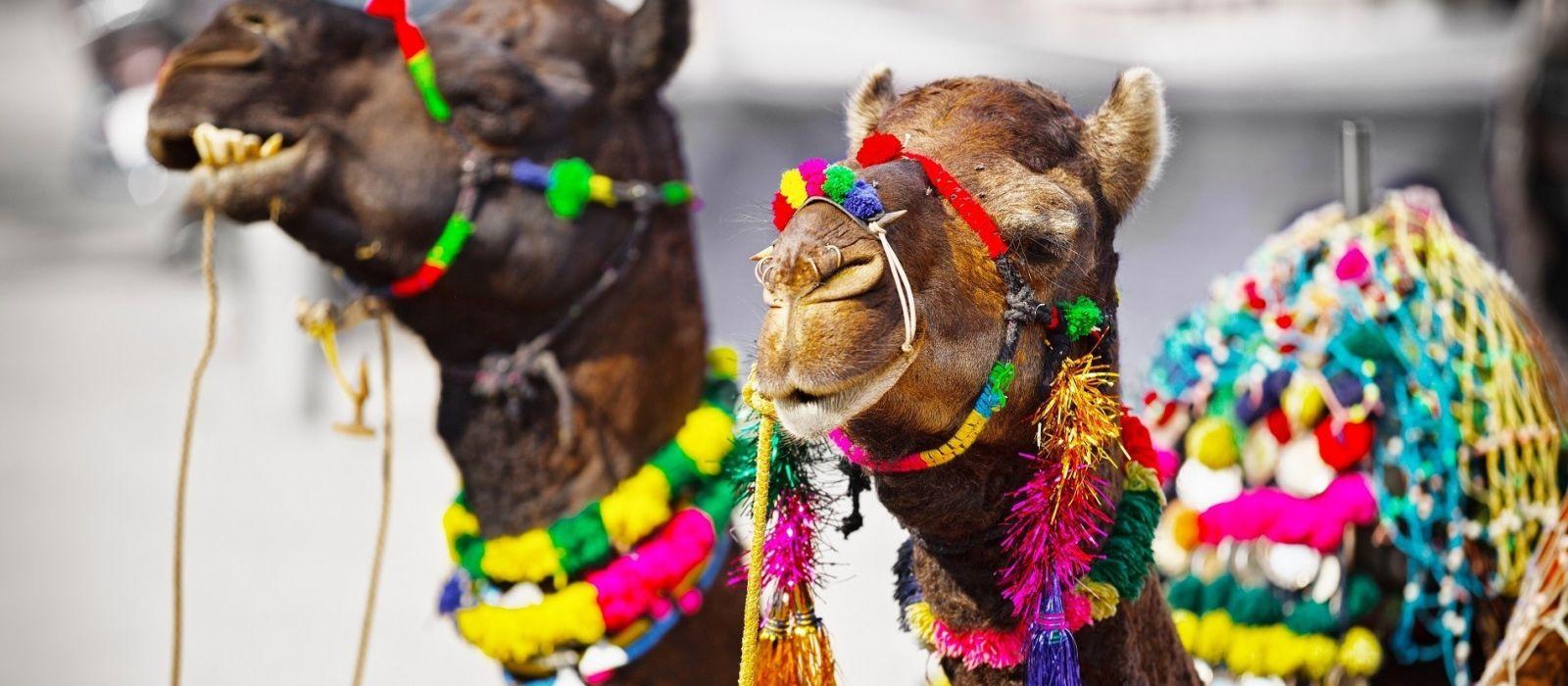 Trident Exclusive: Kulturelle Schätze Nordindiens Urlaub 3