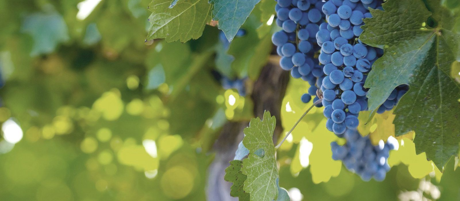 Argentina and Chile: Food and Wine Experience Tour Trip 1