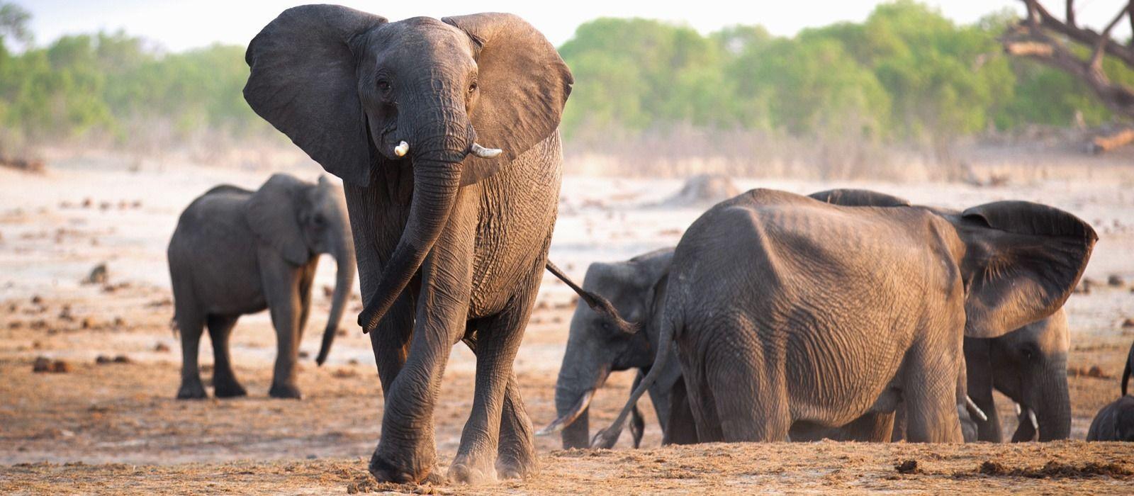 Masai Mara, Meru & Diani Beach – Safari & Strand in Kenia Urlaub 1