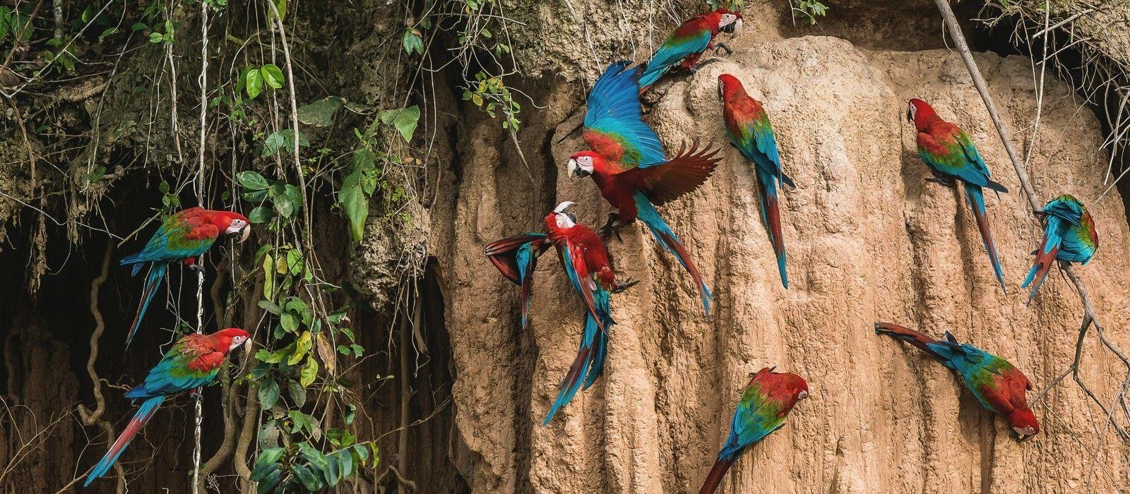 Brazil's Wildlife & Natural Wonders Tour Trip 2