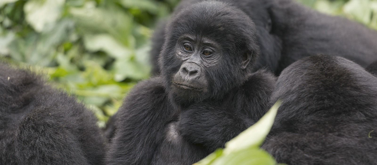 Gorillas, Great Migration and Indian Ocean Dreams Tour Trip 1