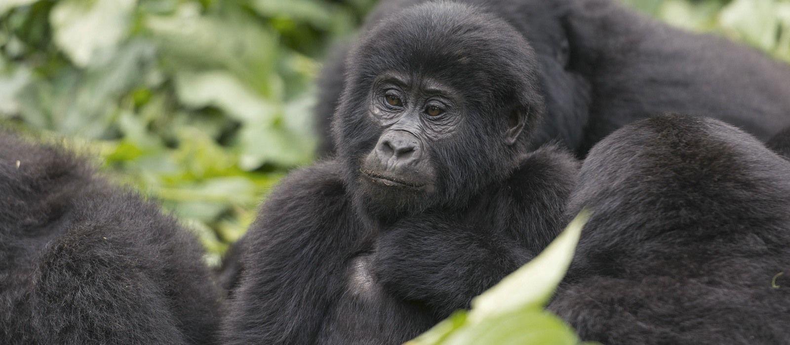 Ruanda & Tansania – Gorilla Tracking & geheimnisvolles Sansibar Urlaub 1