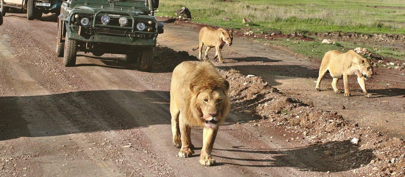 Südafrika Rundreise: Unvergessliche Höhepunkte Urlaub 1