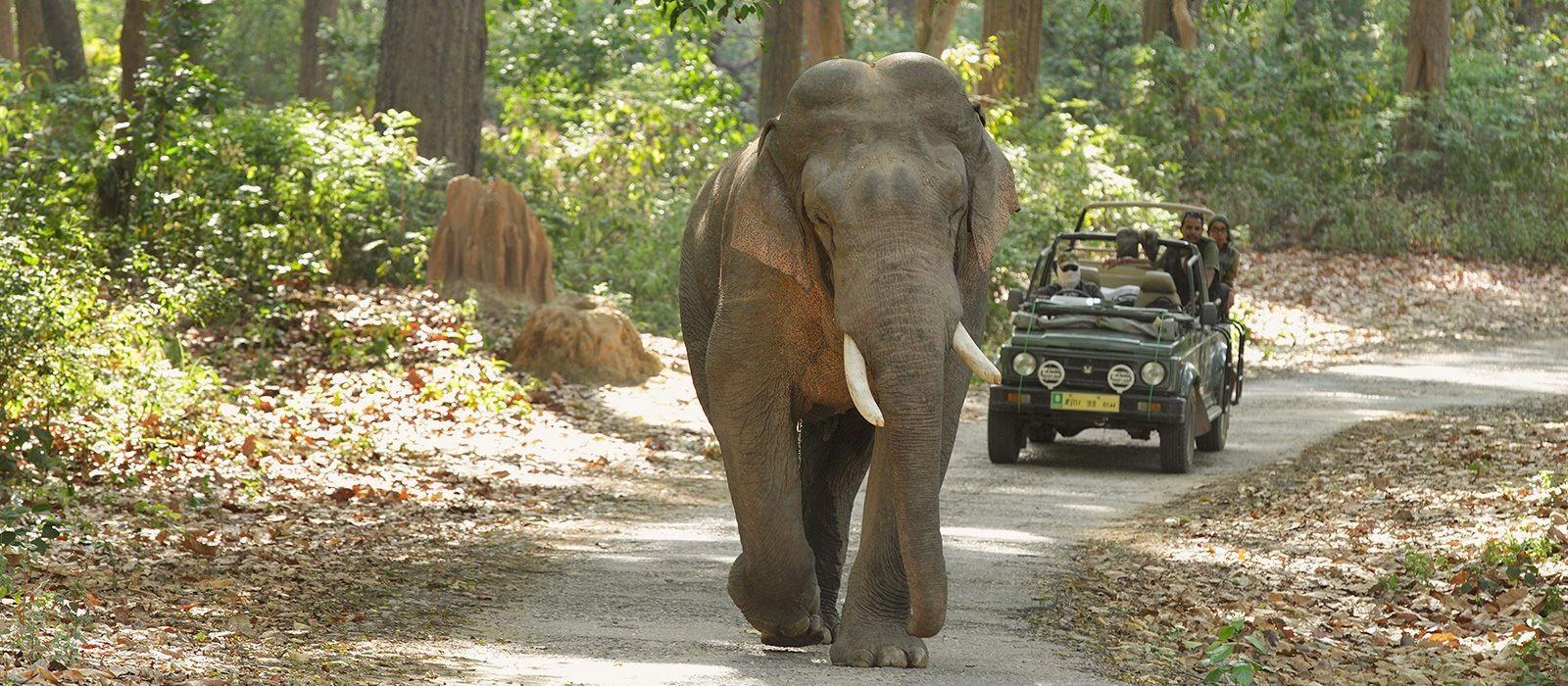 Rajasthan-Reise: Paläste und Tiger Urlaub 5