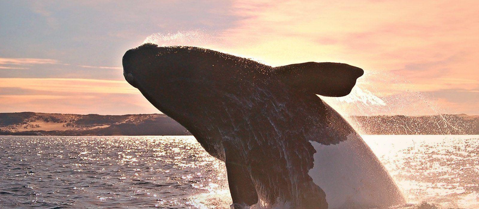 Südamerikas Tierwelt – Individuelle Rundreise für Naturliebhaber Urlaub 2