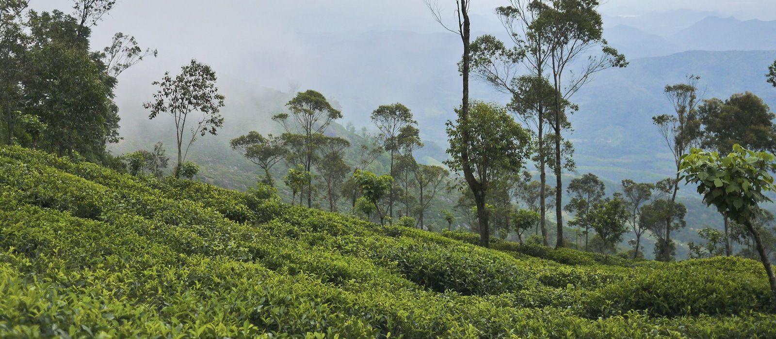 Simply Sri Lanka: Temples & Tea Tour Trip 2