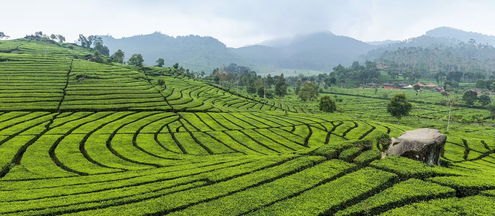 Simply Sri Lanka: Temples & Tea Tour Trip 1
