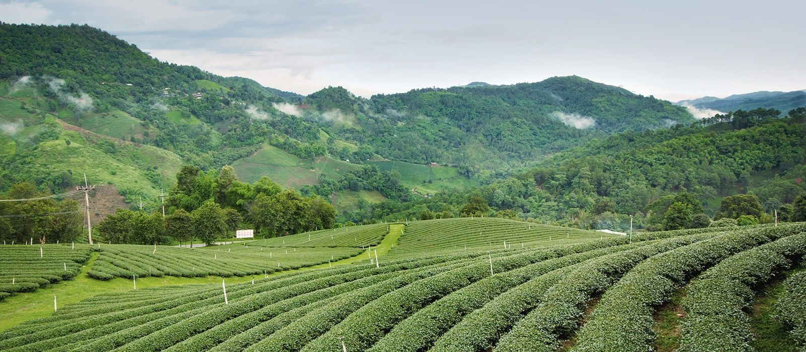 The British Tea Legacy Tour Trip 1