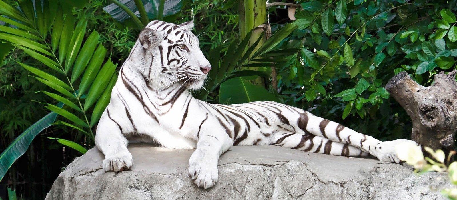 Rajasthan-Reise: Paläste und Tiger Urlaub 3