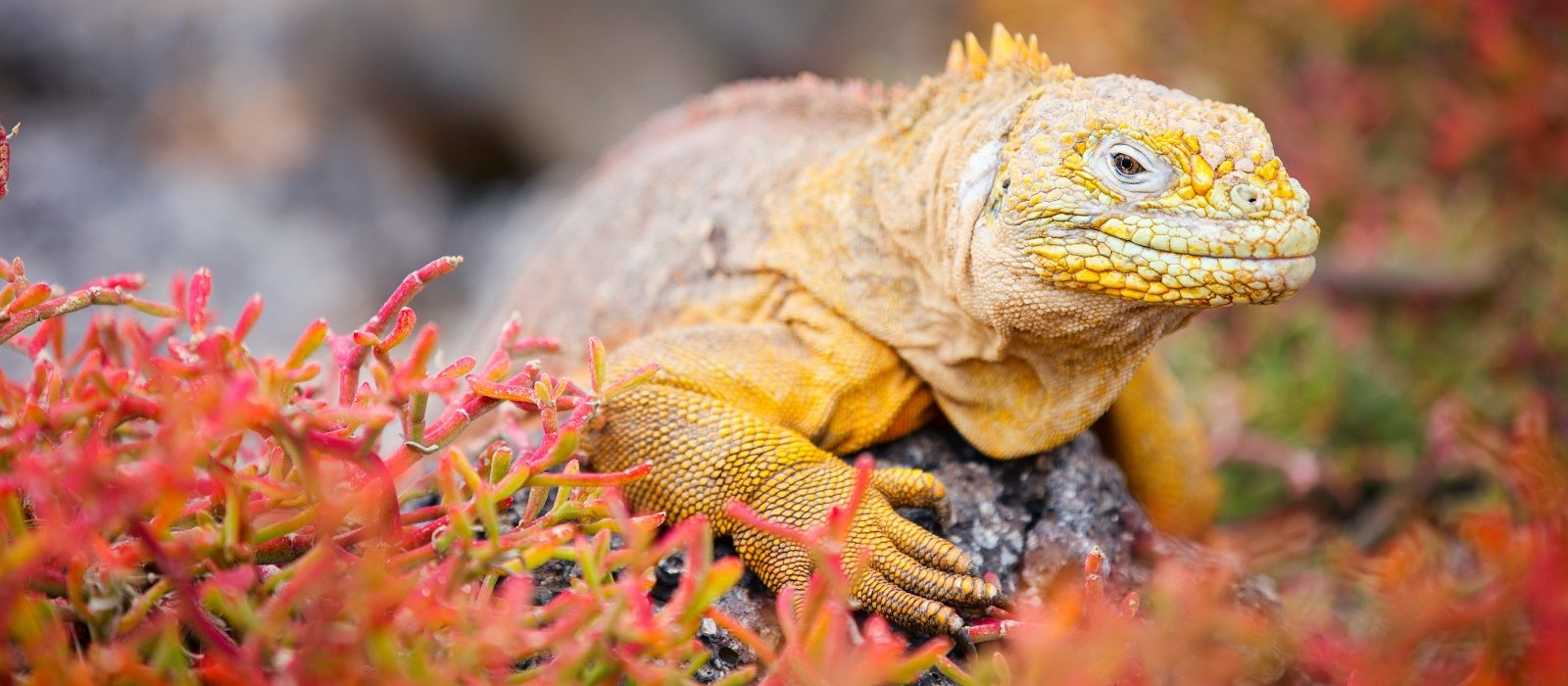 Ecuador: Galapagos, Traditions & Chocolate Tour Trip 6