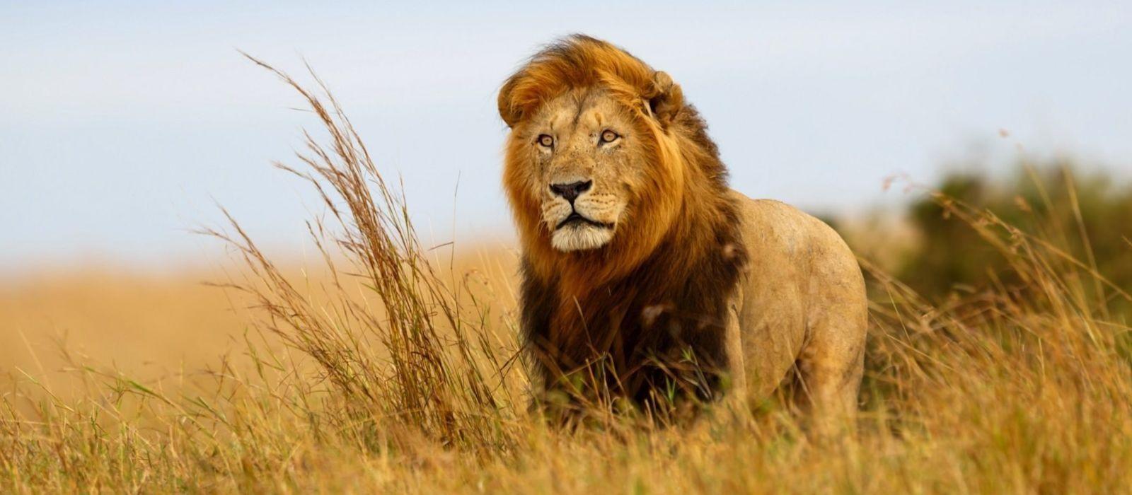 Die Höhepunkte von Kenia und Tansania Urlaub 1