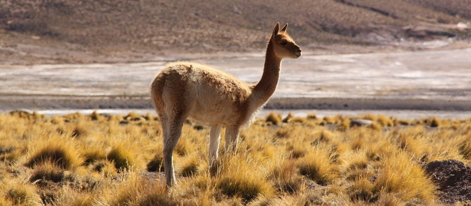 Chile: Awasi Iconic Extremes Tour Trip 8