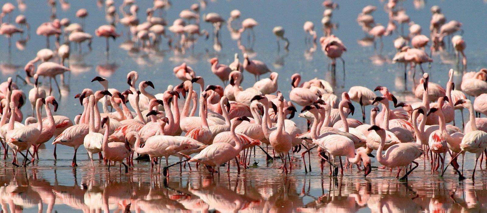 Stilvoll reisen in Tansania & Sansibar Urlaub 2
