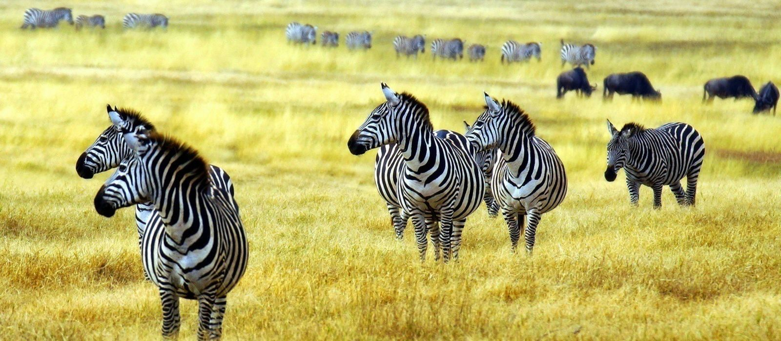 Luxury in Tanzania: Wilderness & Wildlife Tour Trip 5