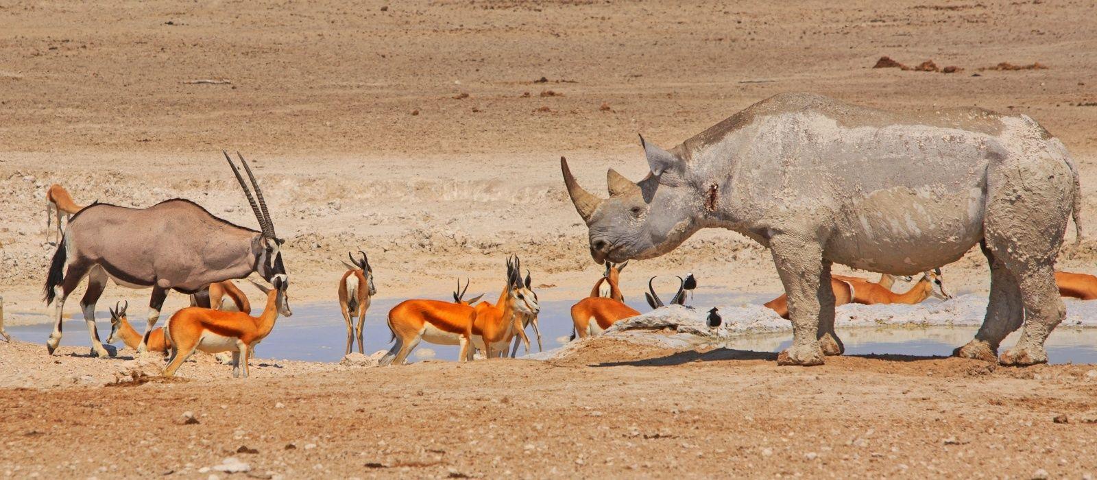 Destination Etosha (von Lindequist Gate) Namibia