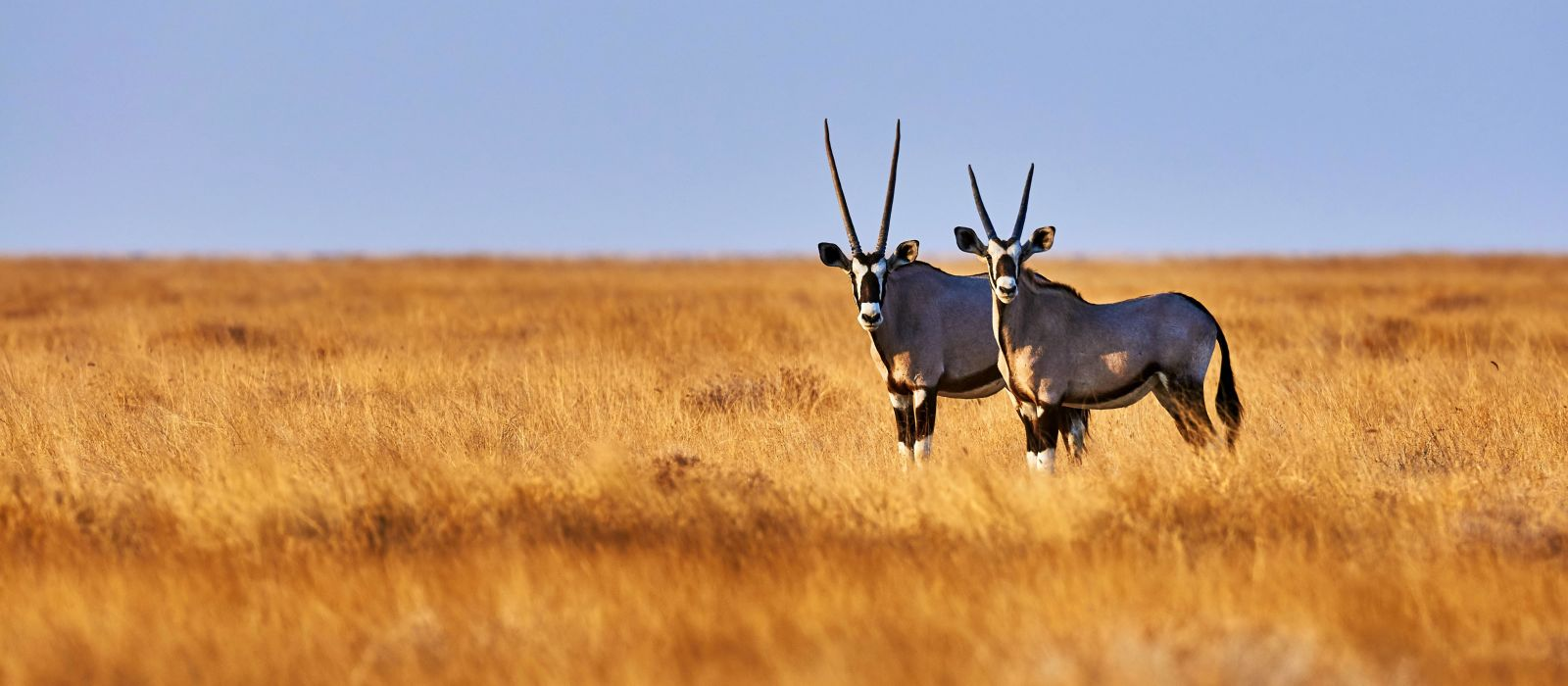 Reiseziel Etosha (von Lindequist Gate) Namibia