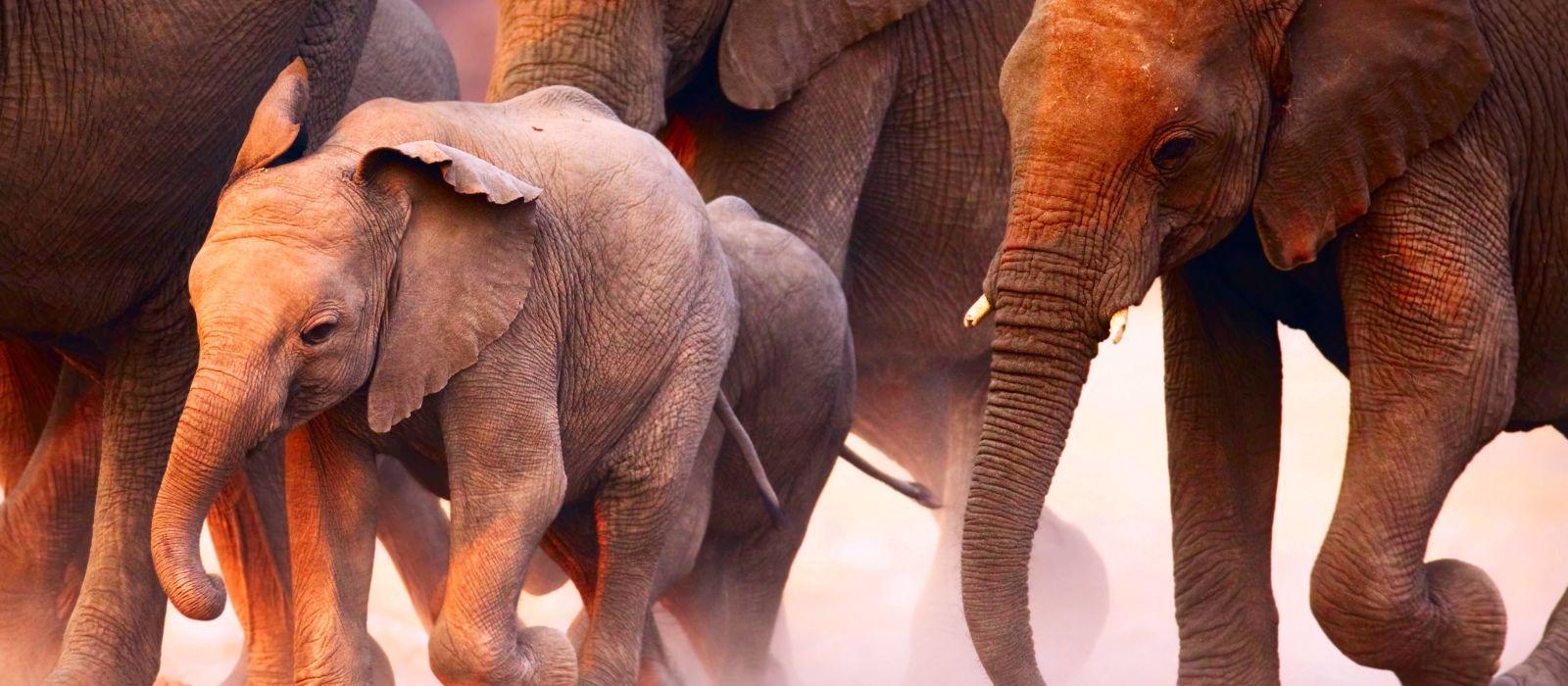 Namibia Luxusreise für Entdecker Urlaub 4