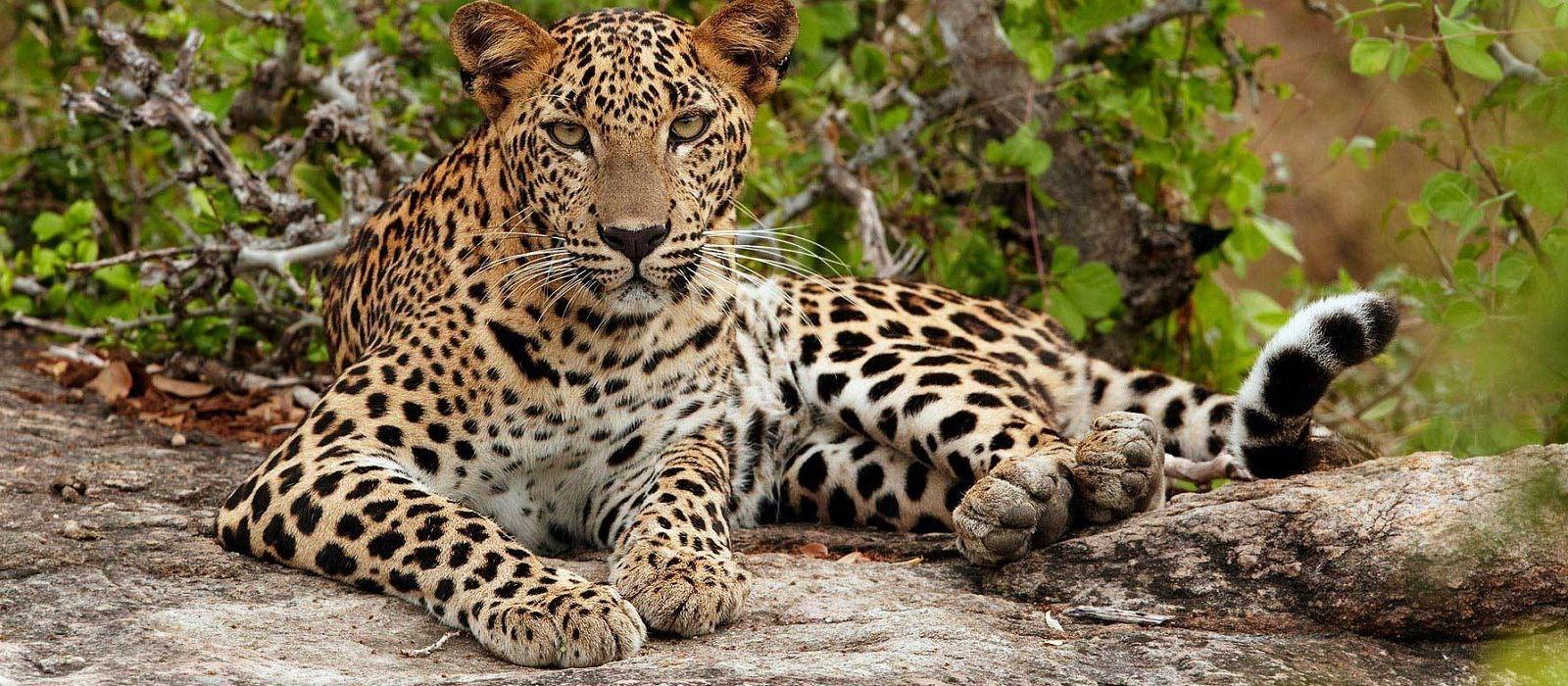Grand of Sri Lanka: Culture, Landscapes & Wildlife Tour Trip 6