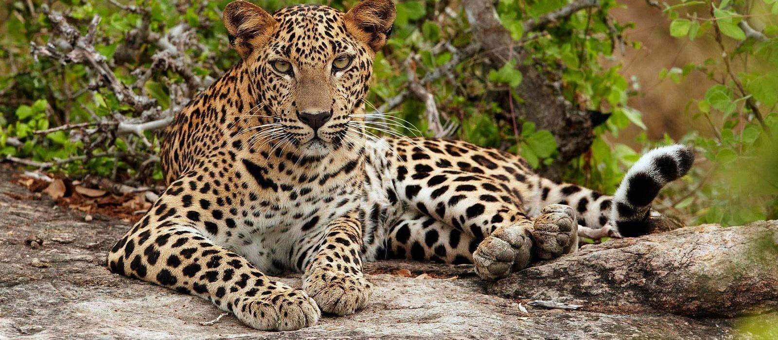 Sri Lanka – Regenwald, Tierwelt und historische Tempel Urlaub 4