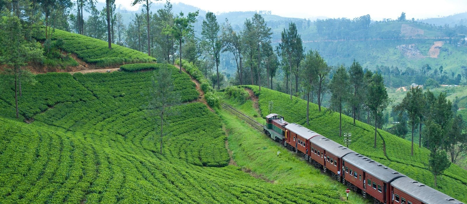 Grand of Sri Lanka: Culture, Landscapes & Wildlife Tour Trip 5