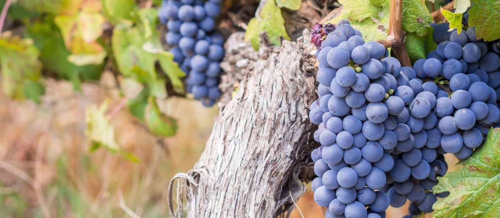 Dine with South Africa's Winemakers Tour Trip 2