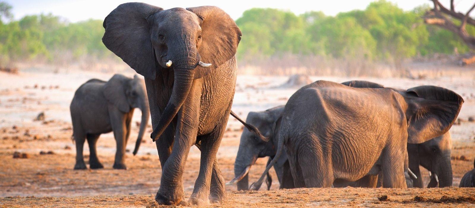 Botswana: Your Wildest Dreams Tour Trip 5