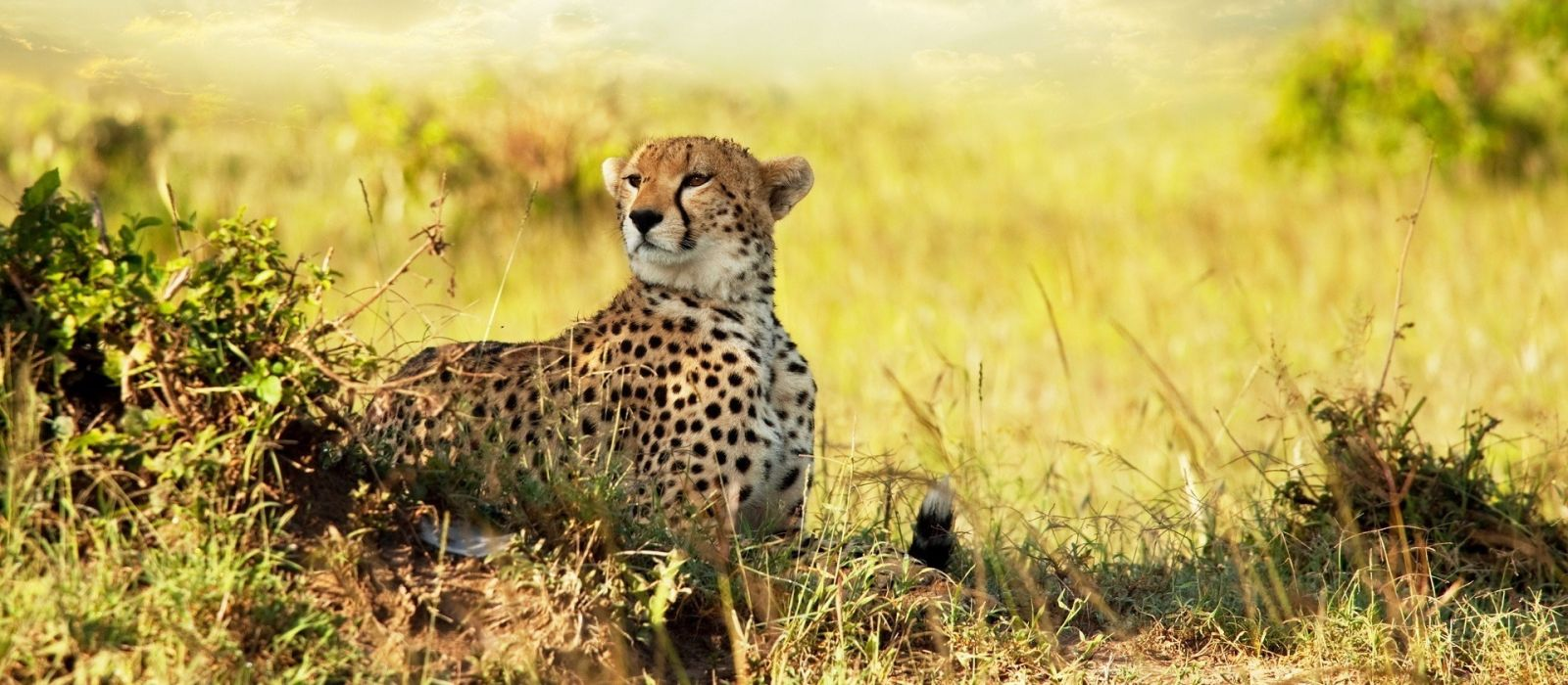 Authentic Tanzania – Wildlife & Pristine Beach Tour Trip 1