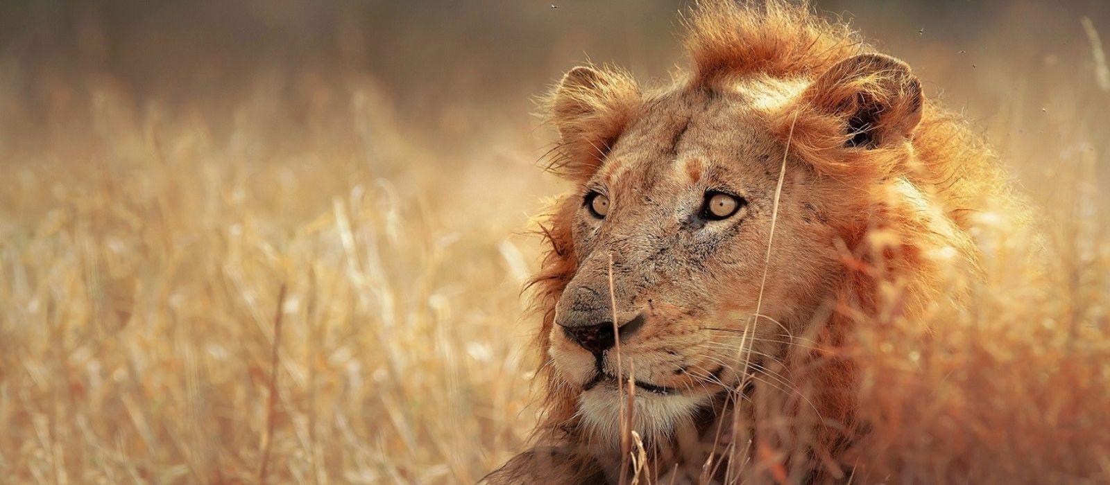 Krüger, Viktoriafälle & Okavango Delta – die Höhepunkte des südlichen Afrika Urlaub 2
