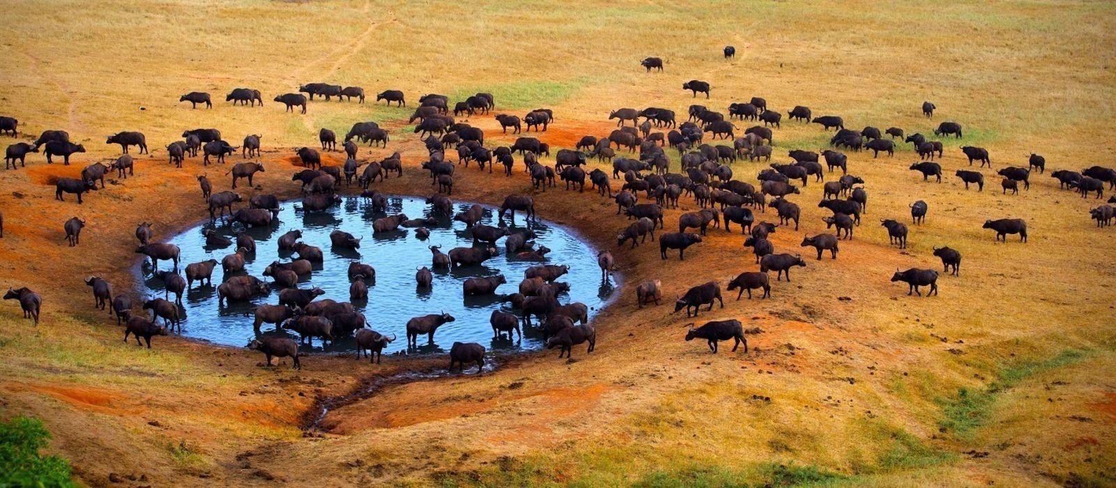 Kenia ganz Klassisch- Samburu, Masai Mara und Erholung am Strand Urlaub 4