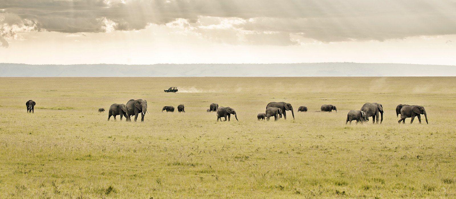 Kenya Tours & Trips