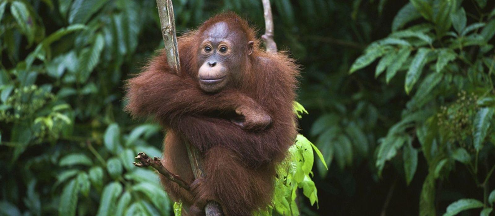 Natural Culture in Indonesia Tour Trip 2