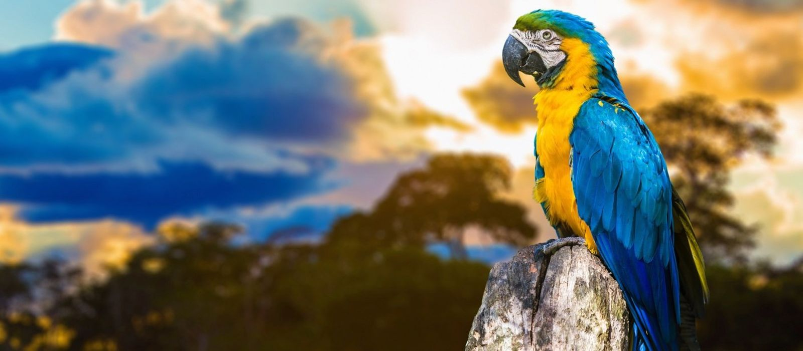 Brazil's Wildlife, Waterfalls and Beach Tour Trip 6