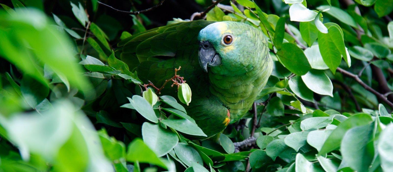 Brazil: Amazonas, Iguazu & Beach Bliss Tour Trip 4