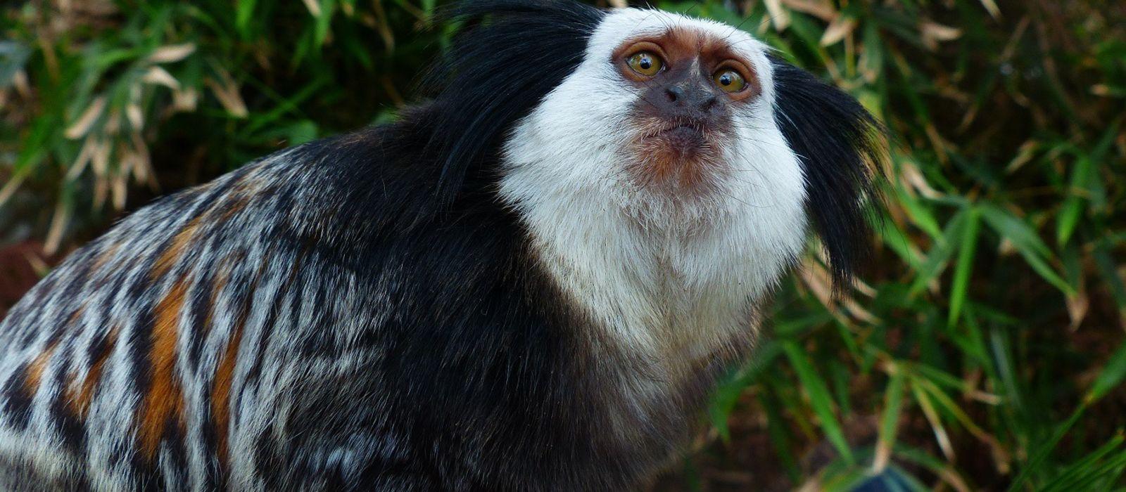 Brasilien: Lebensart und Wunder der Natur Urlaub 6