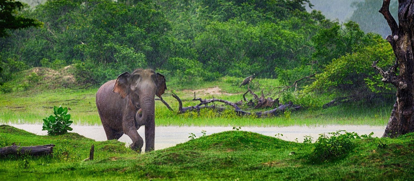 Sri Lankas Kulturelle Höhepunkte Urlaub 2