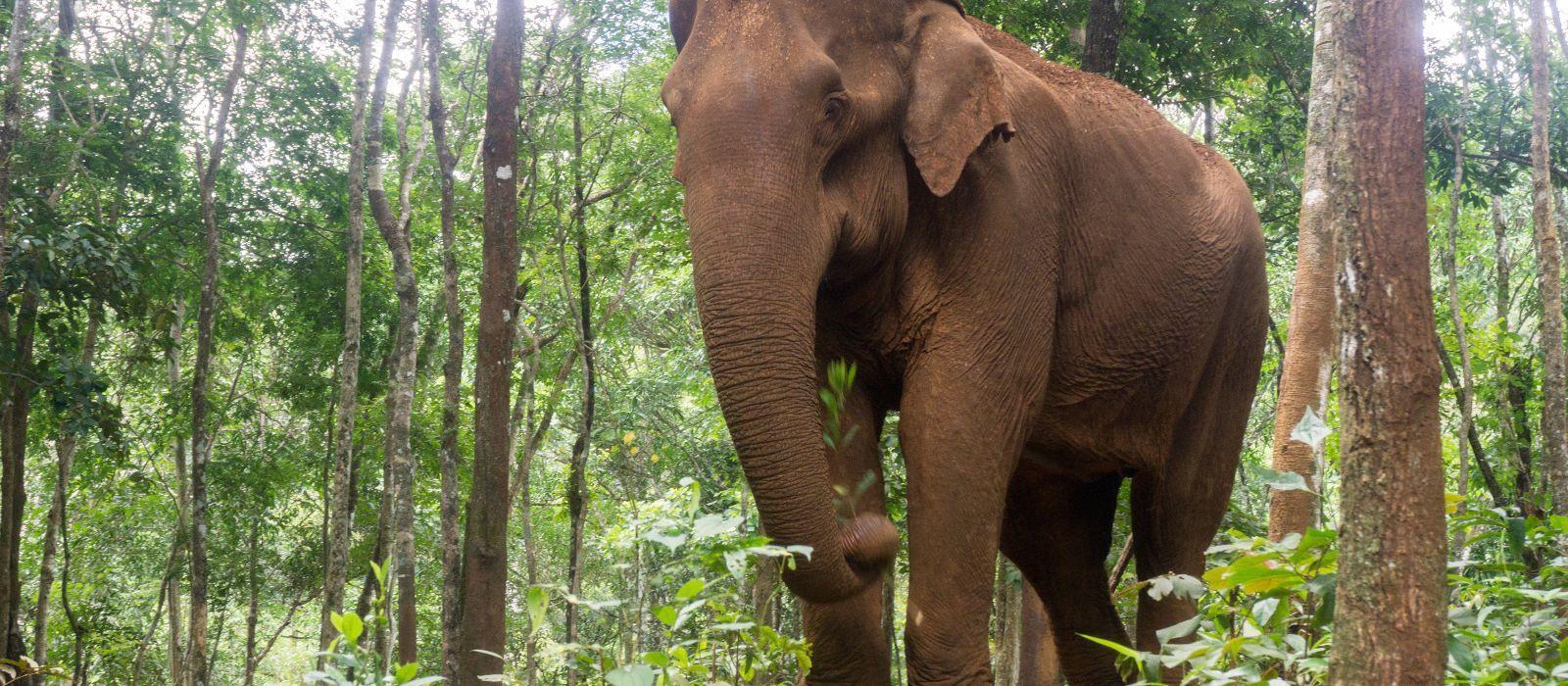 Cambodian Enchantment & Hidden Jewels Tour Trip 3