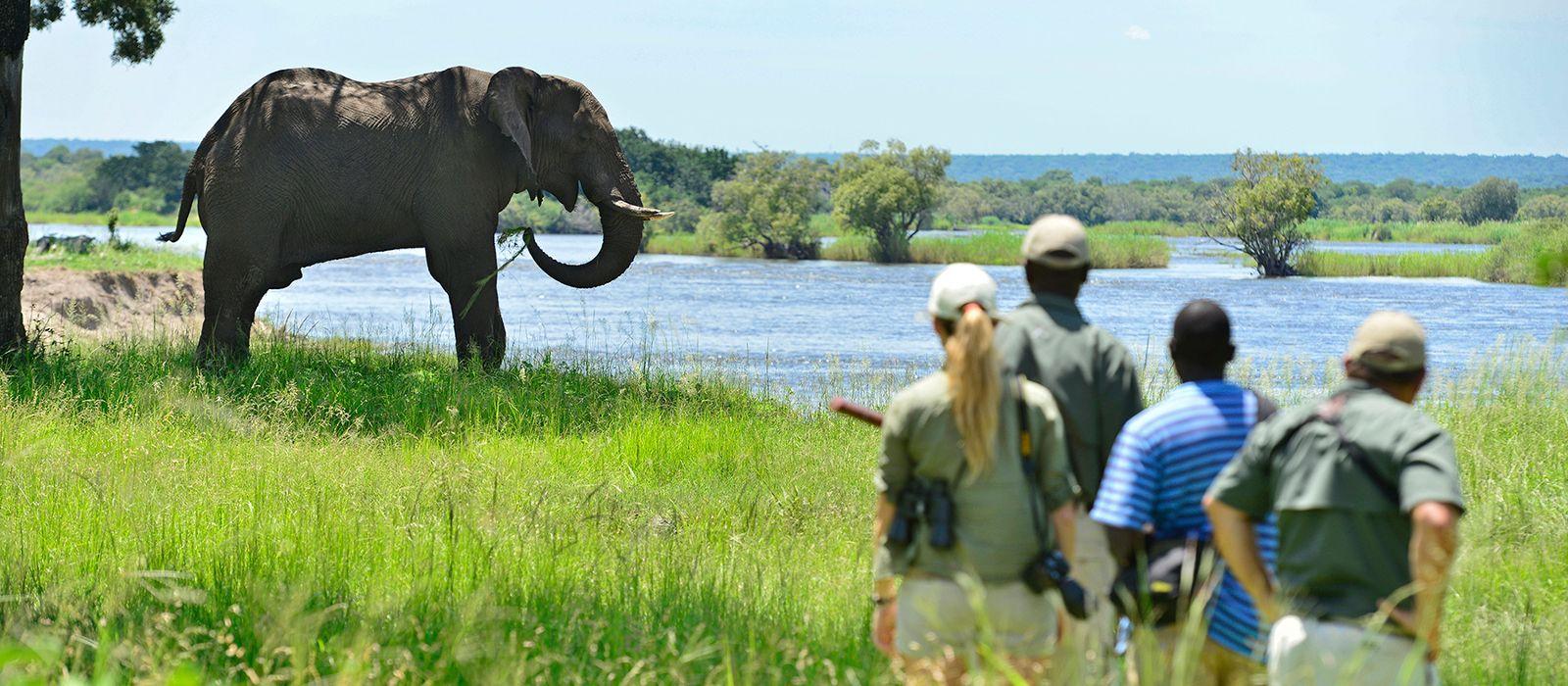 Südafrika, Simbabwe & Botswana: Wilde Tiere & glitzernde Gewässer Urlaub 5