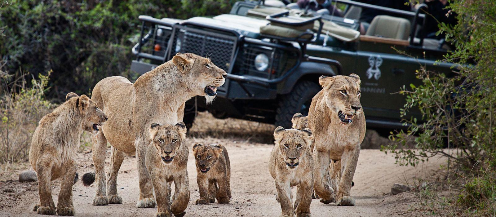 Südafrikas Wildnis entdecken – West Kap und Krüger Nationalpark Urlaub 3