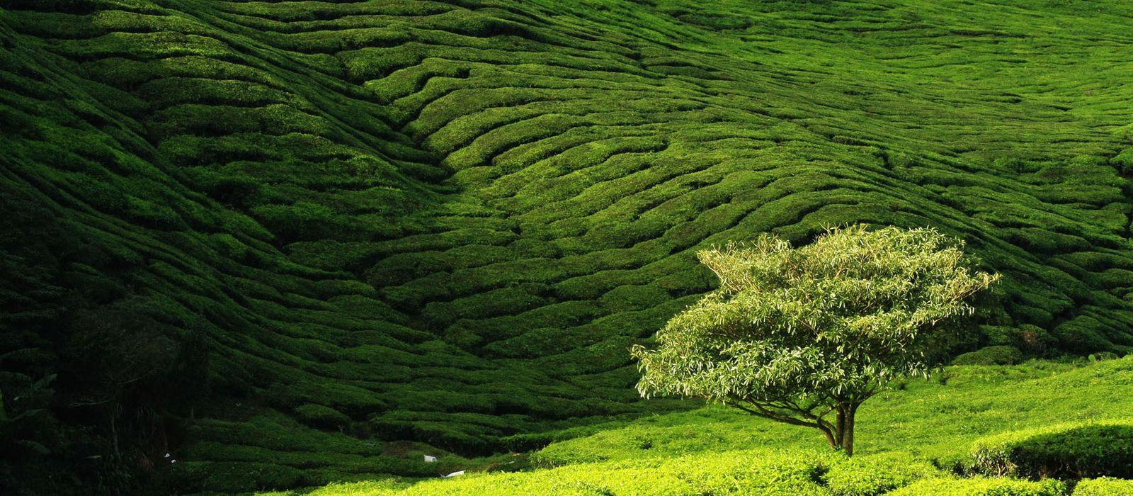 Highlights of Peninsular Malaysia Urlaub 2