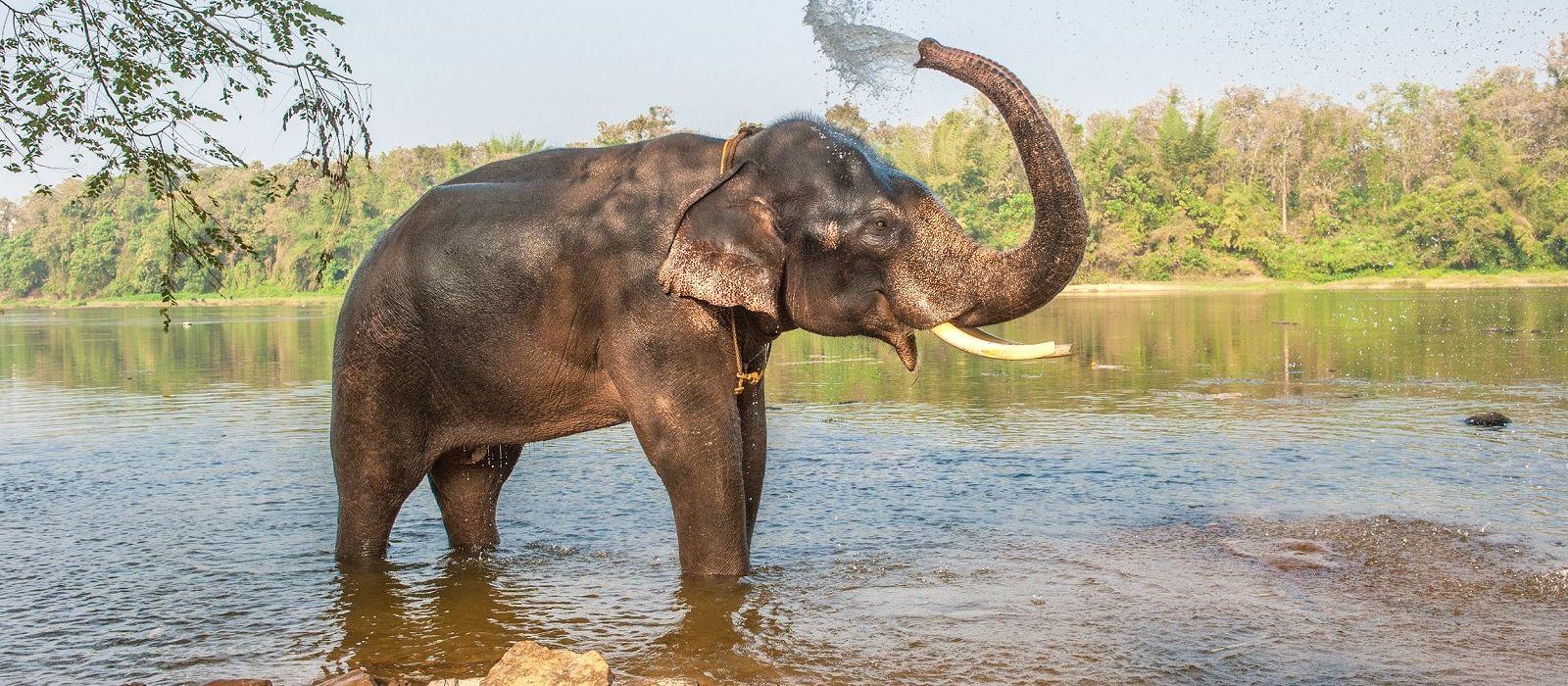 Südliches Erbe, wilde Tiere und Strände Urlaub 2