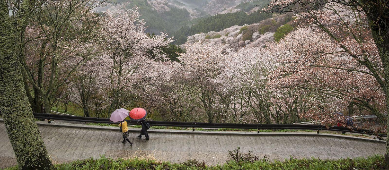 Ancient Zen Legends of Japan Tour Trip 2