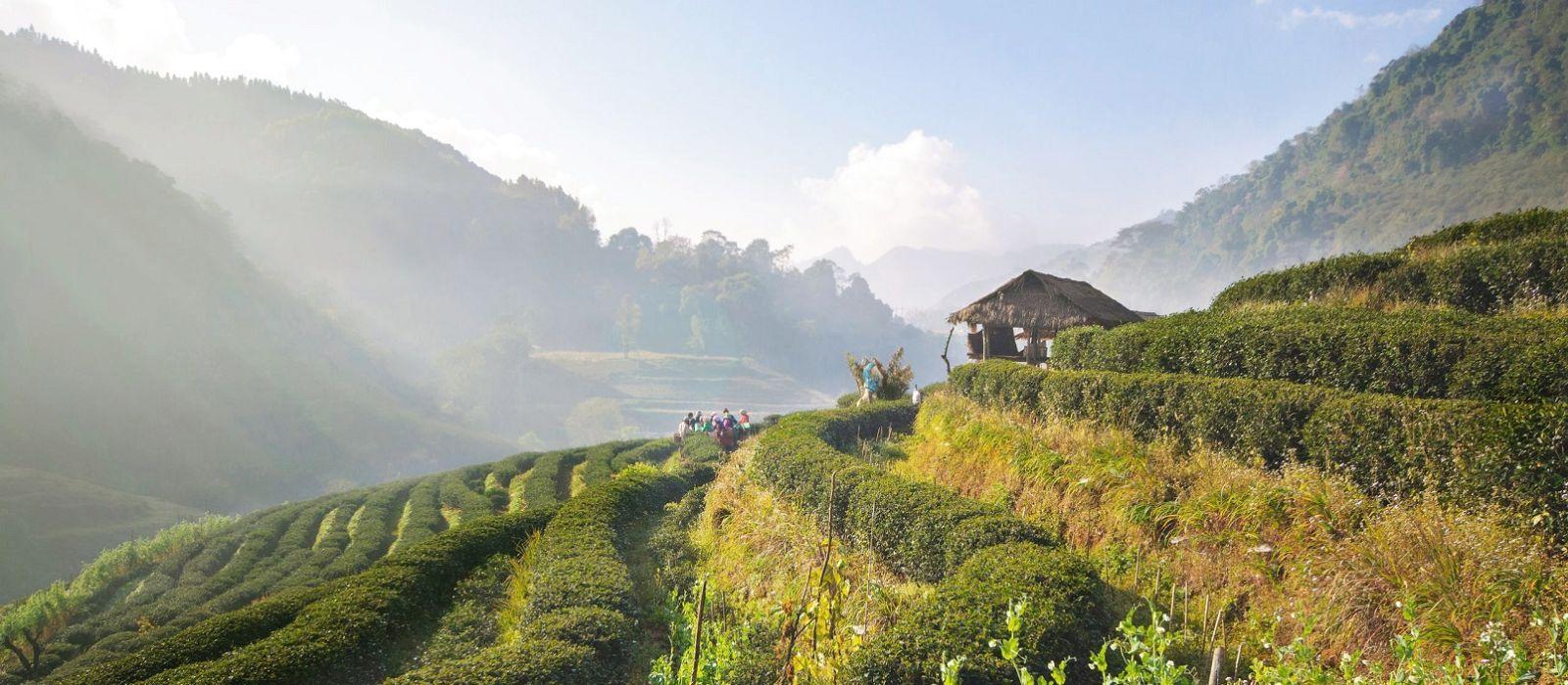 Thailands Norden und der Strand von Koh Samui Urlaub 4