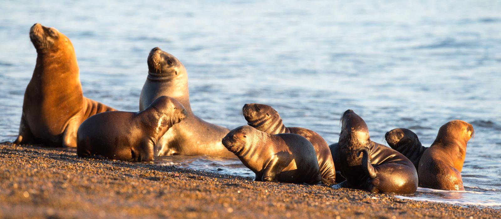 Südamerikas Tierwelt – Individuelle Rundreise für Naturliebhaber Urlaub 1