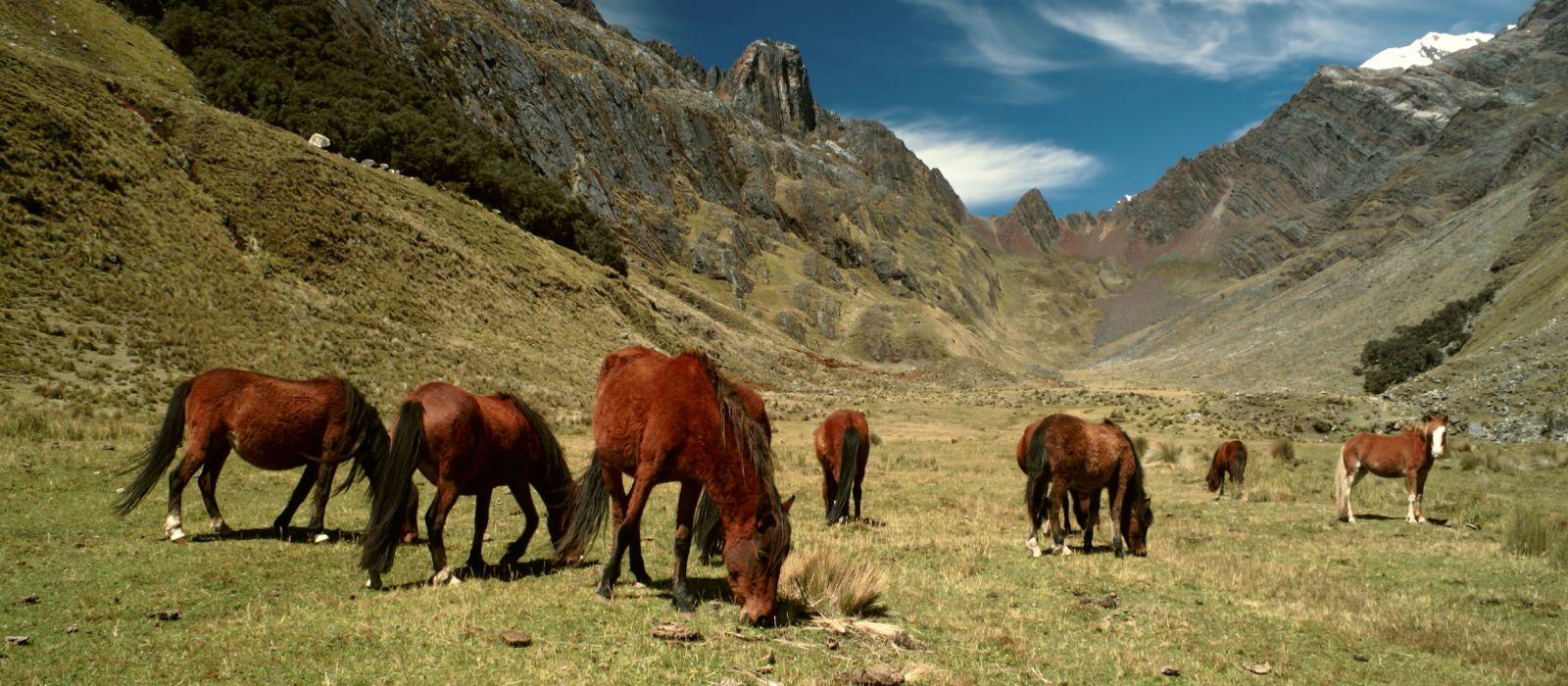 Machu Picchu, Inka-Pfad und Titikaka-See Urlaub 4