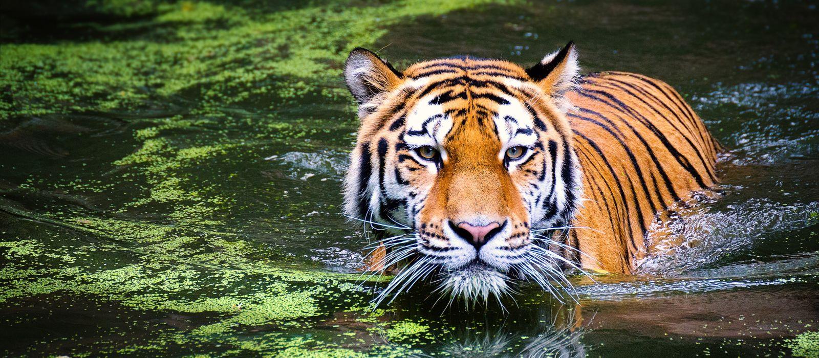 Oberoi Winter Special: Royal Rajasthan and Safari Tour Trip 2