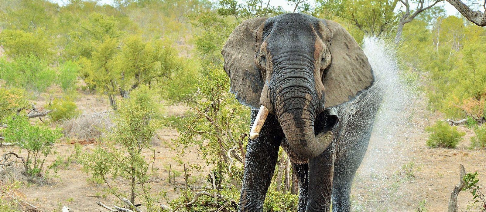 Kapstadt, Rovos Rails und Safari Urlaub 3