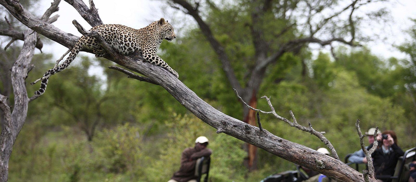 Cape Town, Rovos Luxury & Kruger Tour Trip 4