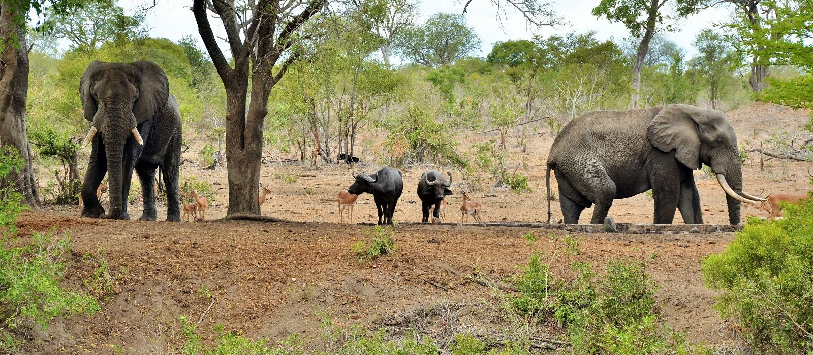 South Africa: Western Cape and Kruger Tour Trip 4