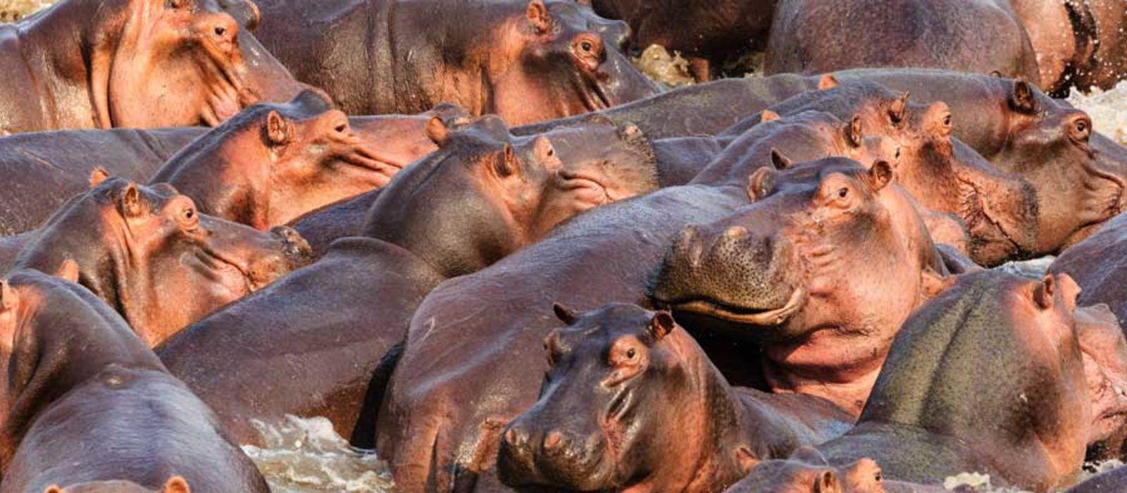 Malawi, Sambia und Mosambik: Safari, Malawisee und Strand Urlaub 3